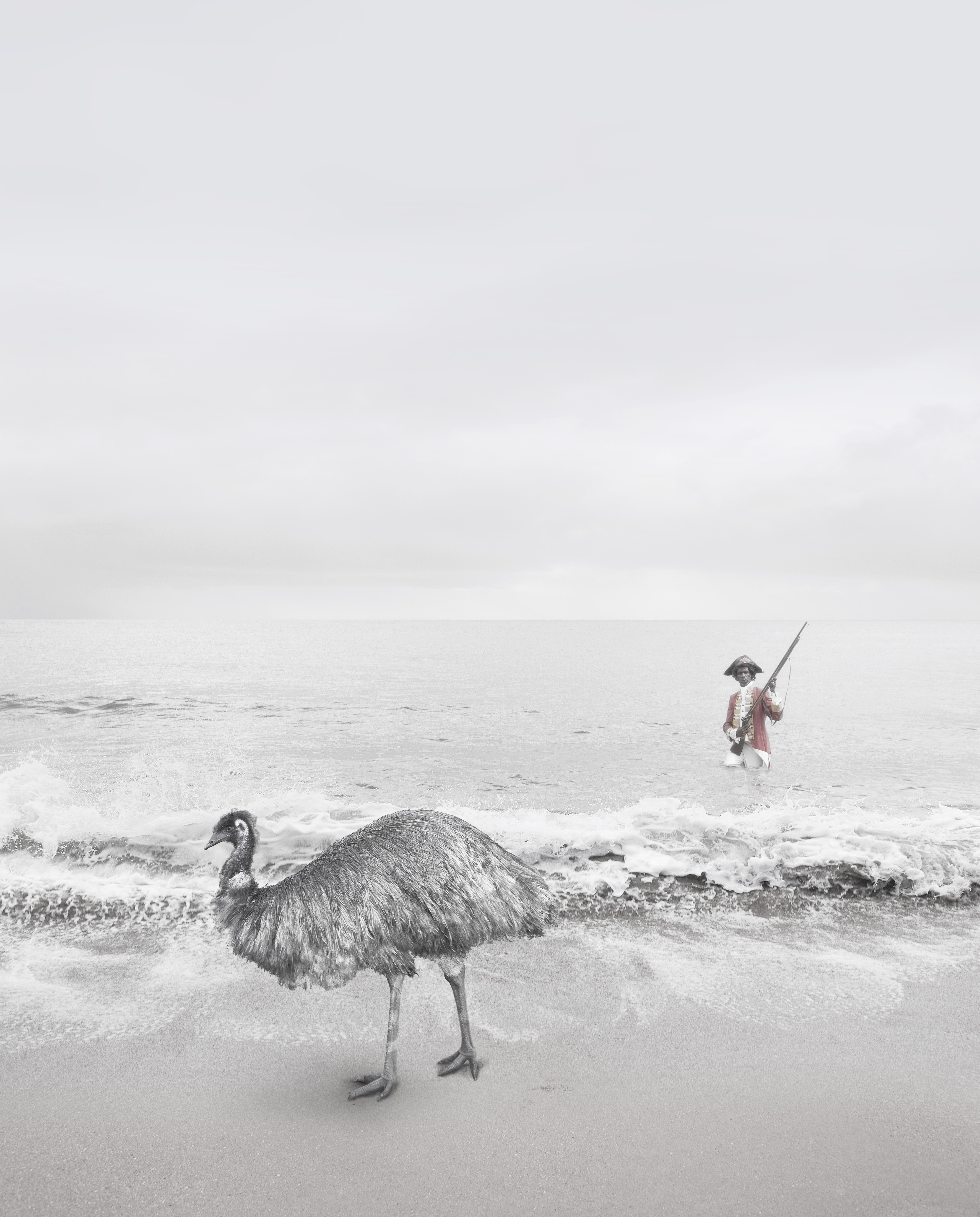 A composite image of an Aboriginal man in British naval dress coming to shore, and an emu on the beach.