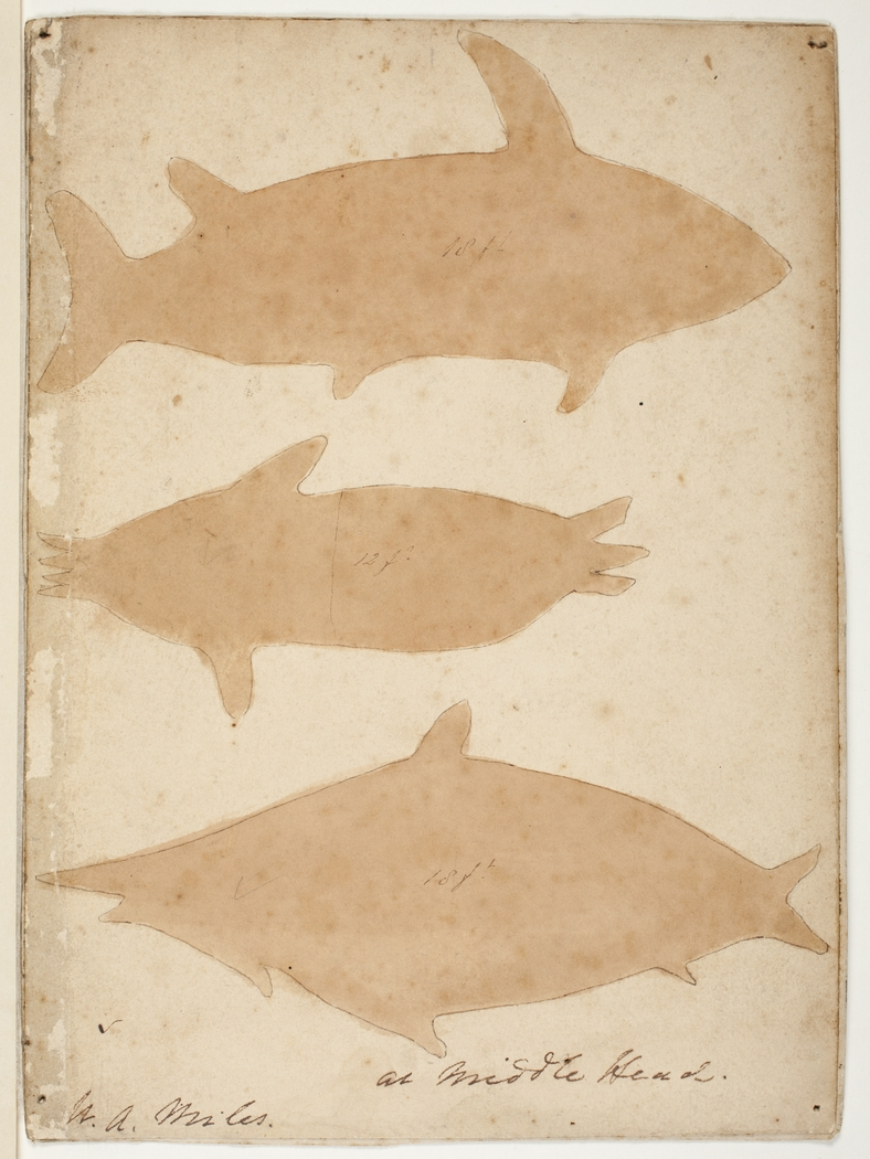 First drawings of animals stock photo image of carvings