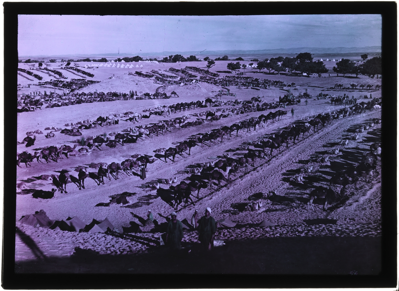 Camel lines of the Egyptian Camel Corps at Esdud. Palestine, February, 1918.