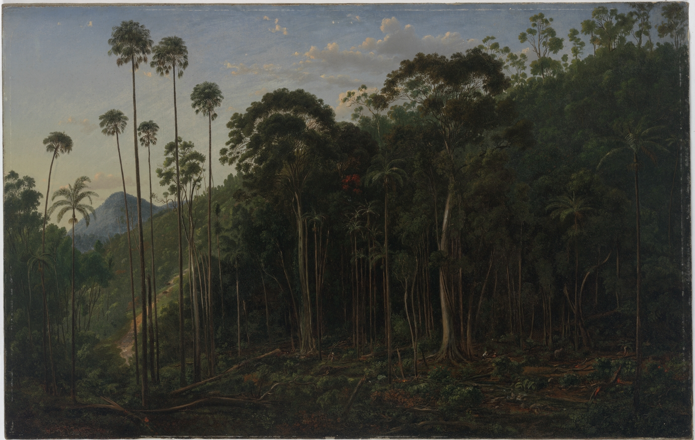 Cabbage Trees near the Shoalhaven River, N.S.W., 1860 / Eugene von Guerard