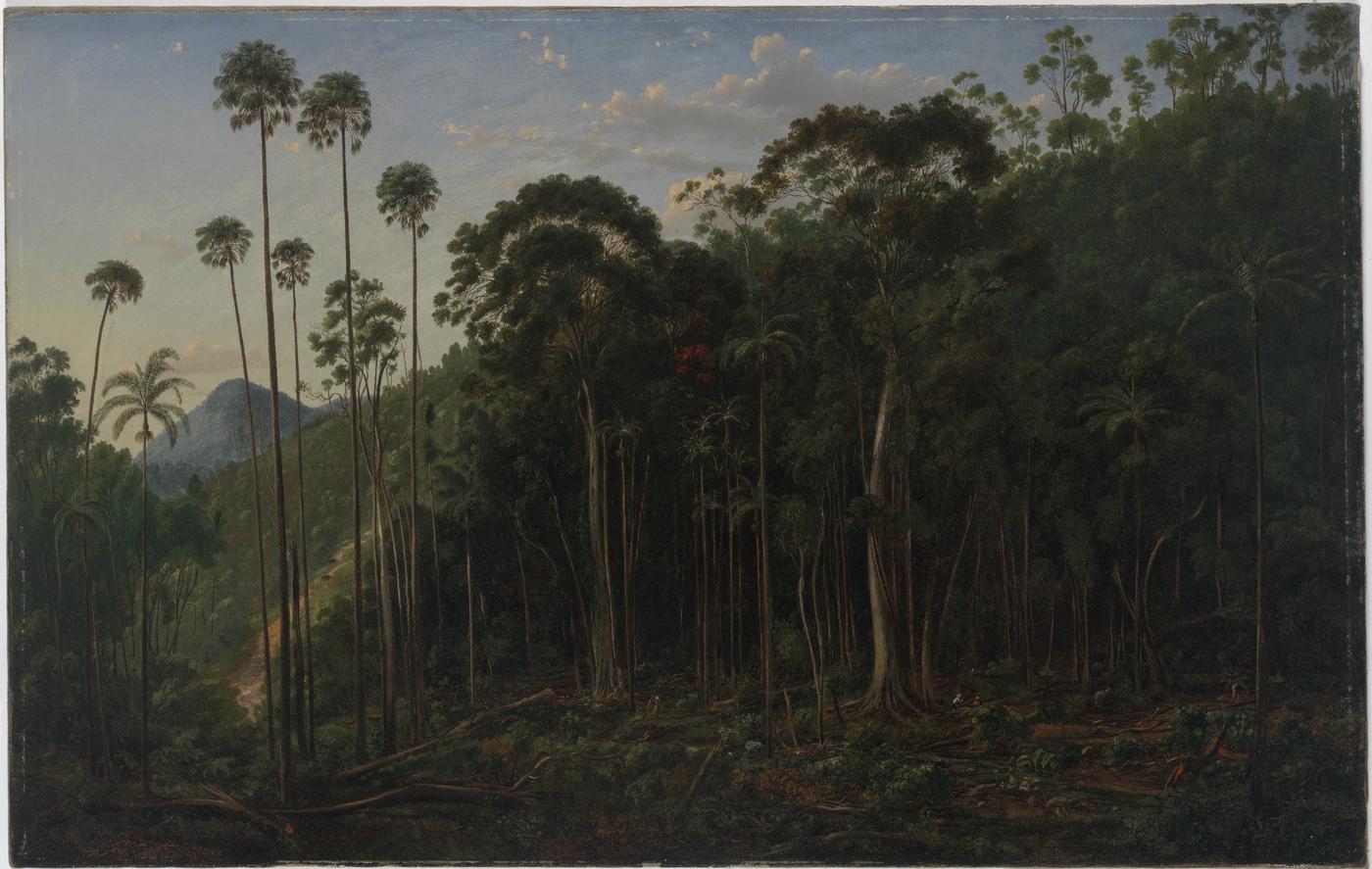 Cabbage Trees near the Shoalhaven River, N.S.W., 1860 / Eugene von Guerard