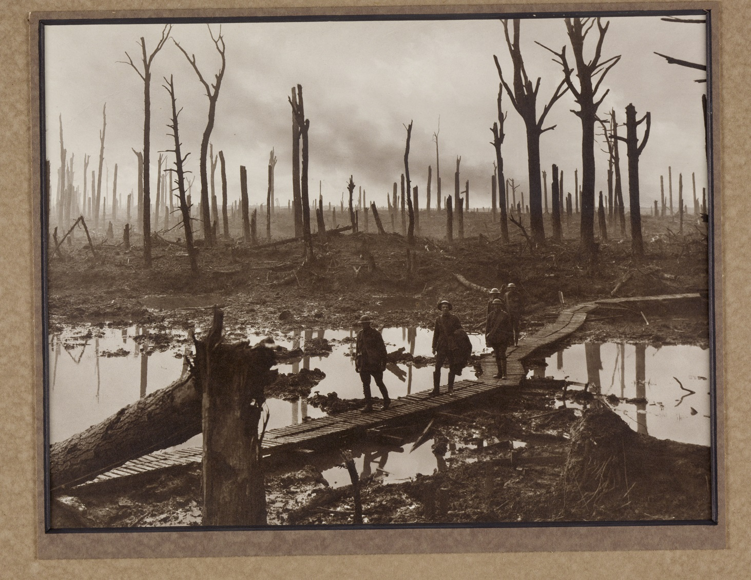 The shell shattered areas of Chateau Wood, 1917.
