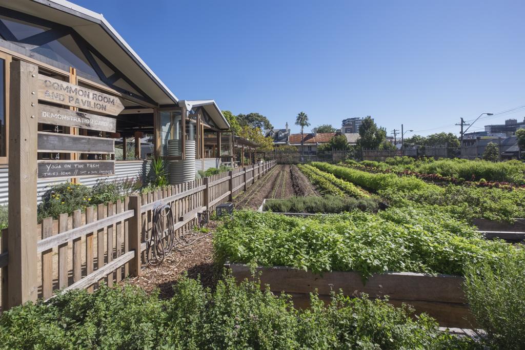 Camperdown community garden