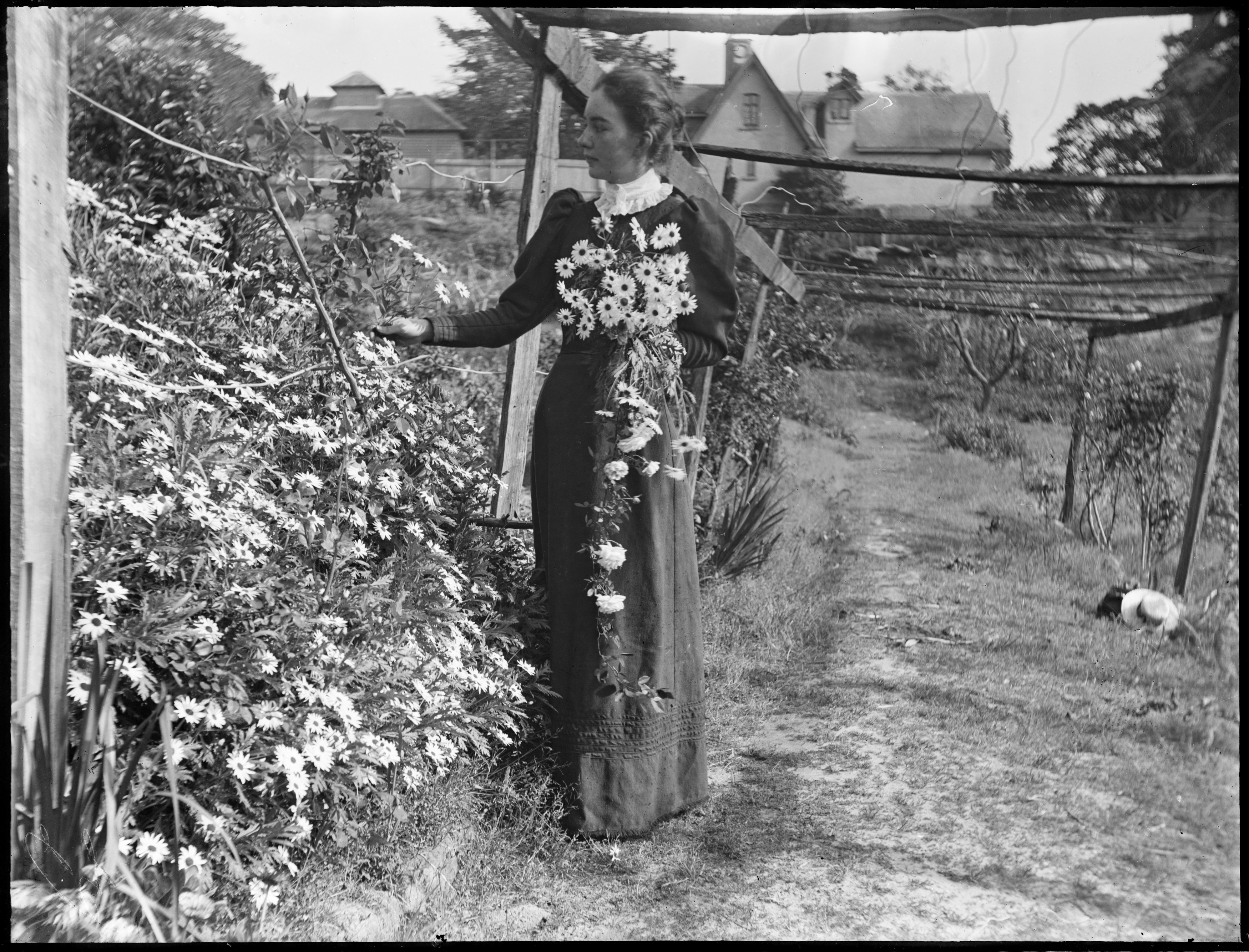 Young woman picking flowers in the garden at Hawthornden, Edgecliff, poss. Lucy Macpherson (1874-1909)