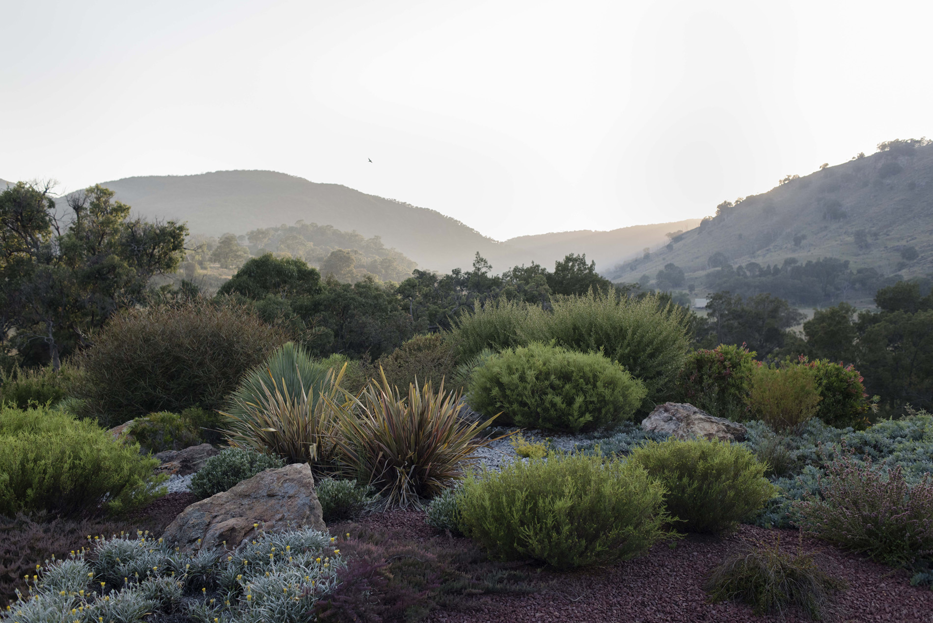 A photograph of a garden of low bushes with mountains in the distance.