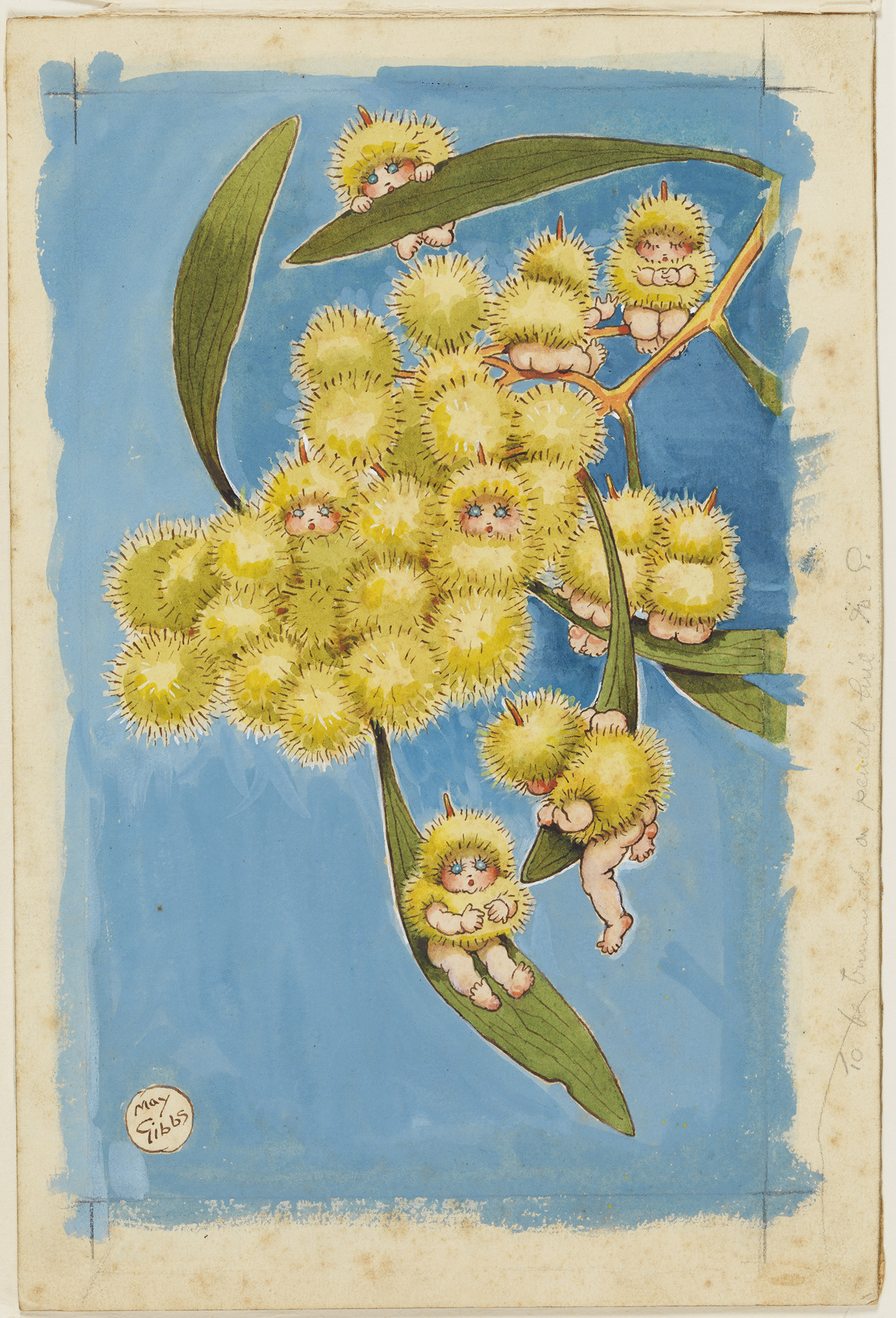 A colour watercolour illustration of babies popping out of wattle flowers.