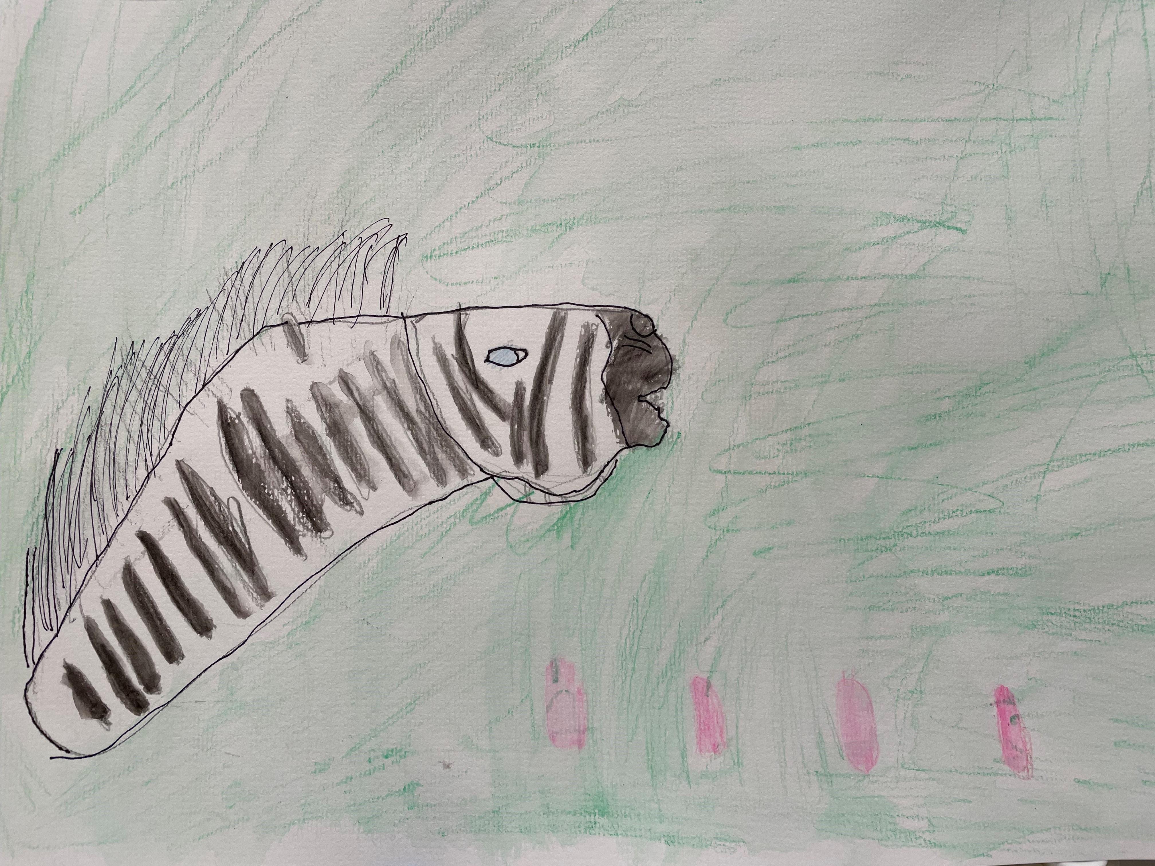 Isabelle - Zebra