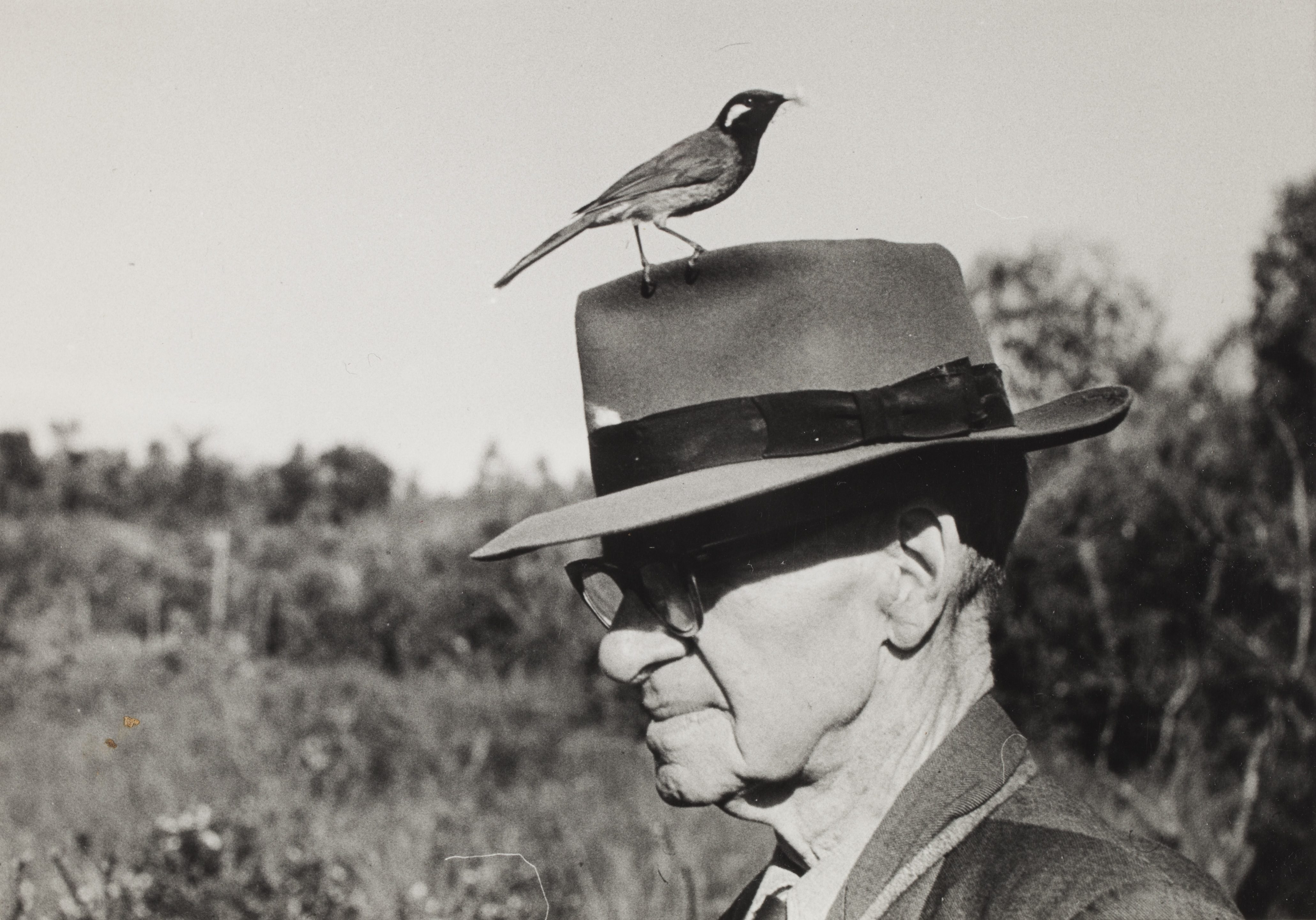 Mateship with Birds: Chisholm with a White-eared Honeyeater on his hat, probably in Kuring-gai Chase