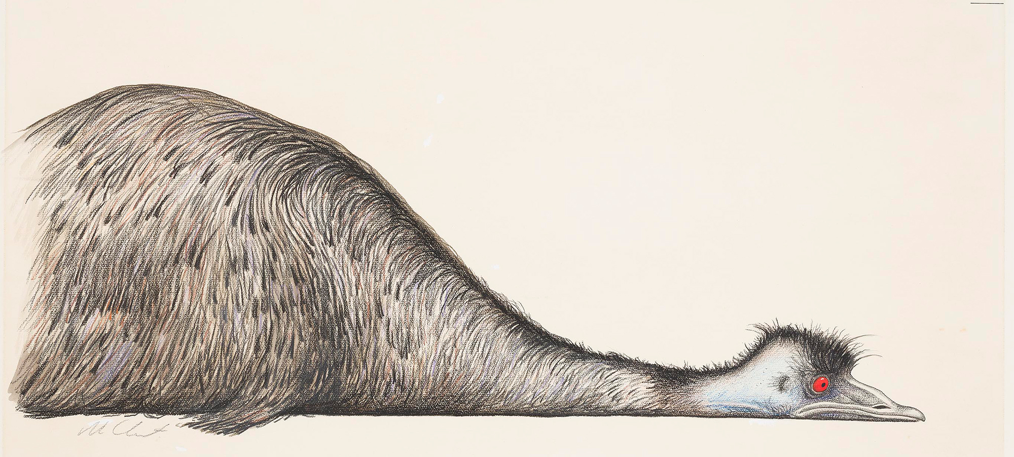 A drawing of an emu lying on the ground.