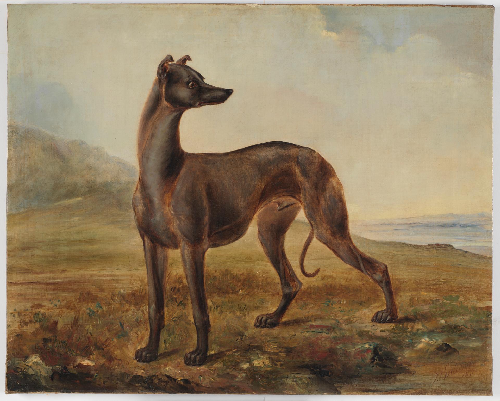 Kangaroo dog owned by Mr Dunn of Castlereagh Street, Sydney, 1853 / painted by Thomas Tyrwhitt Balcombe