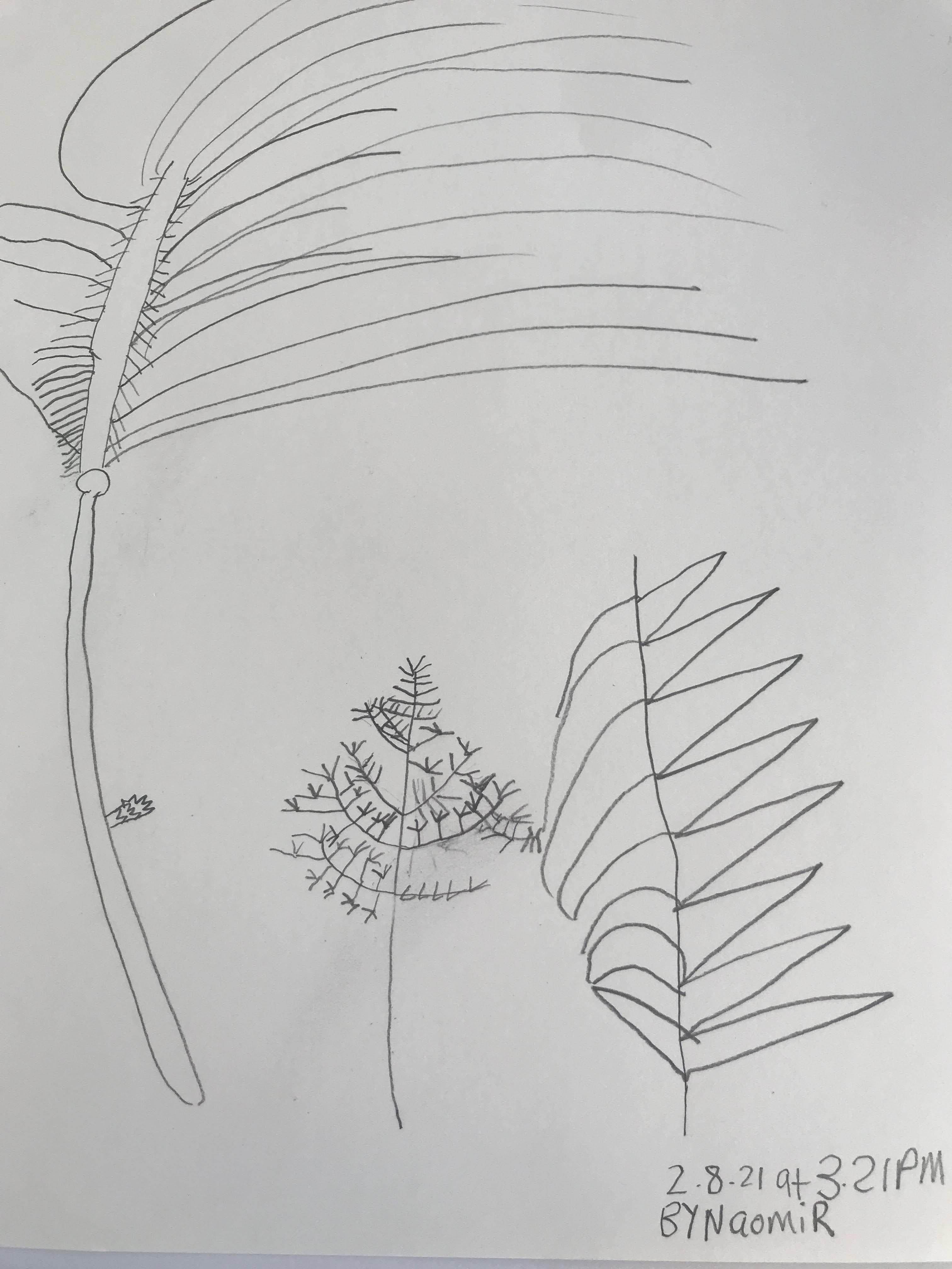 Naomi - Nature drawing