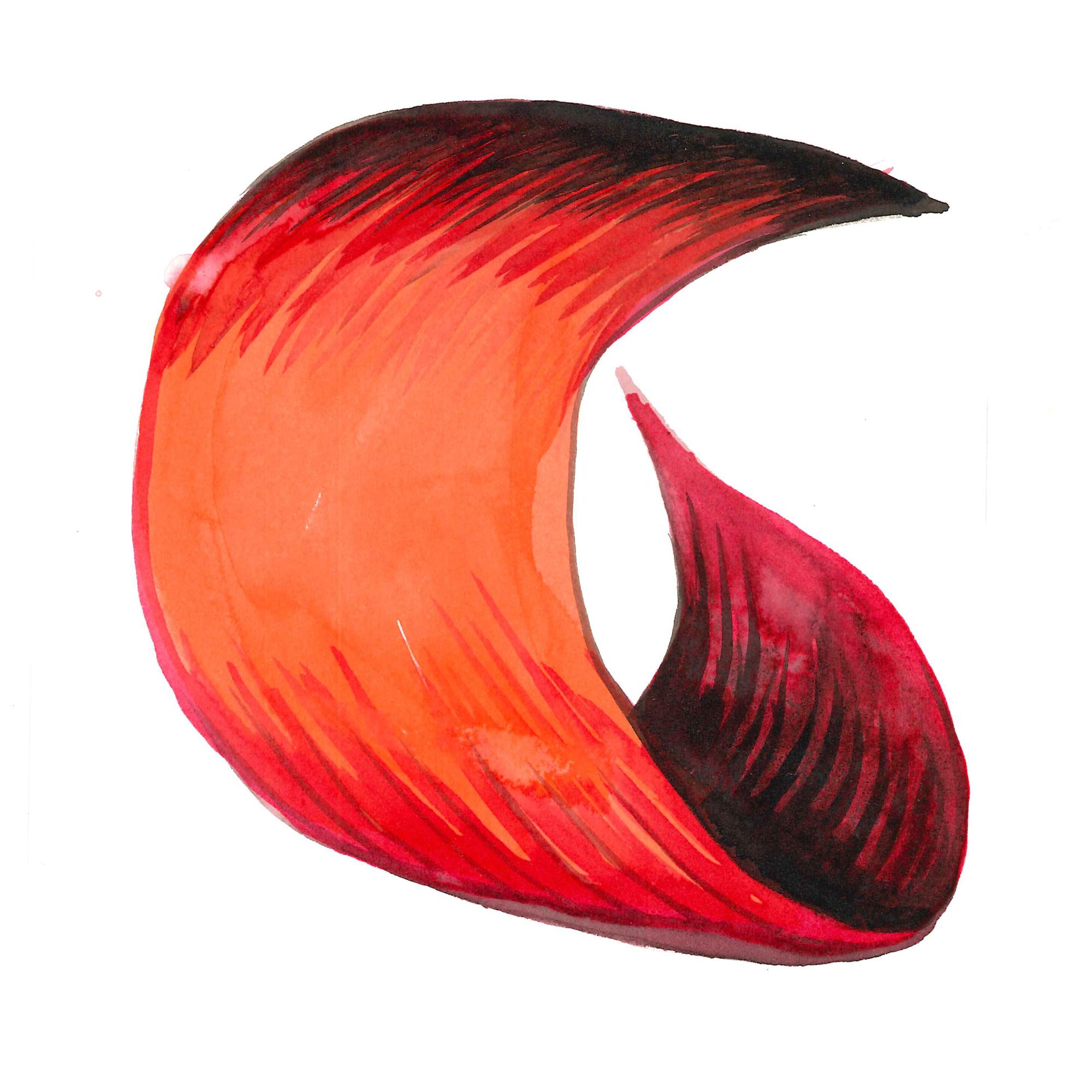 watercolour - waratah petal detail