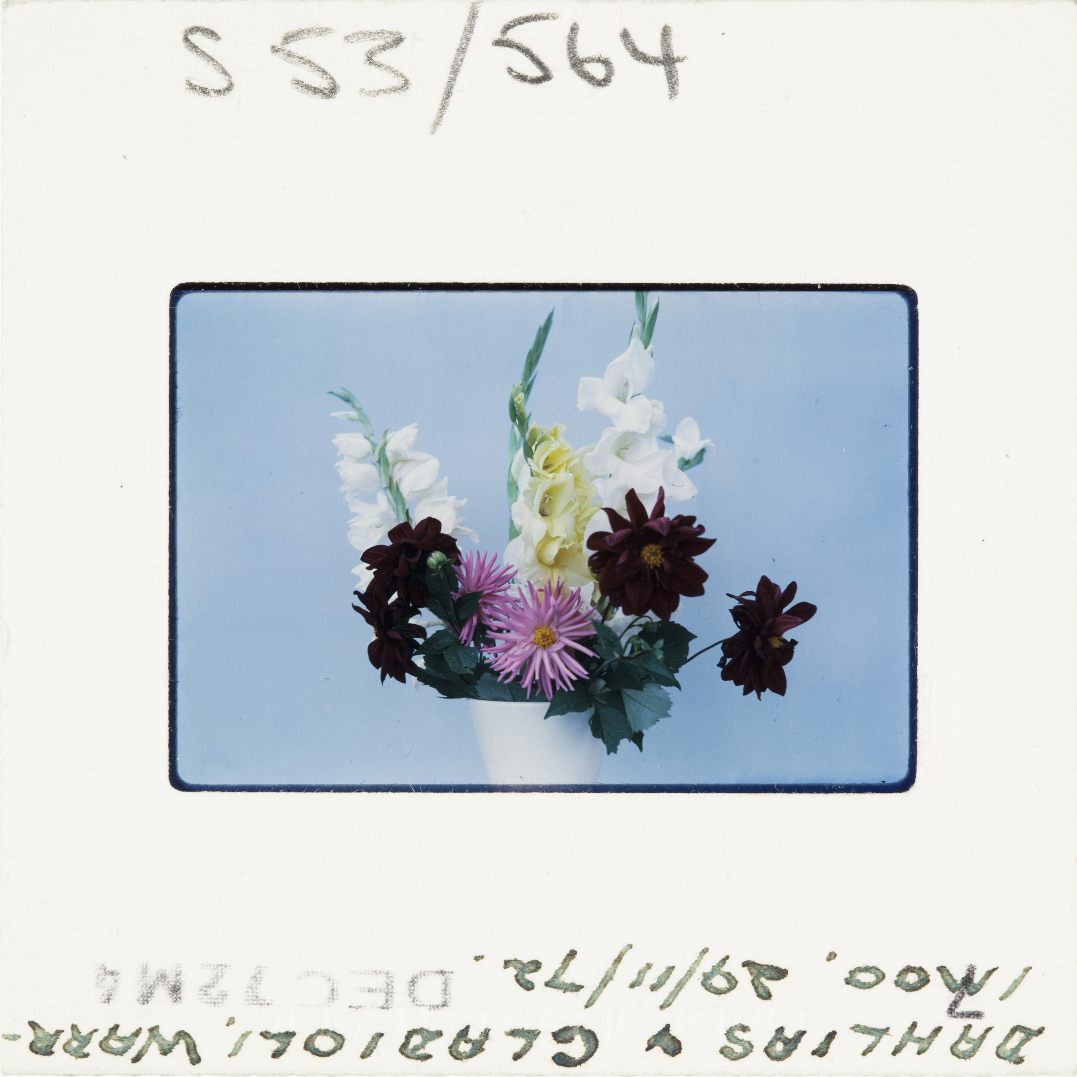 A colour Kodak slide dated 1972 - a vase of flowers against an egg shell blue background.
