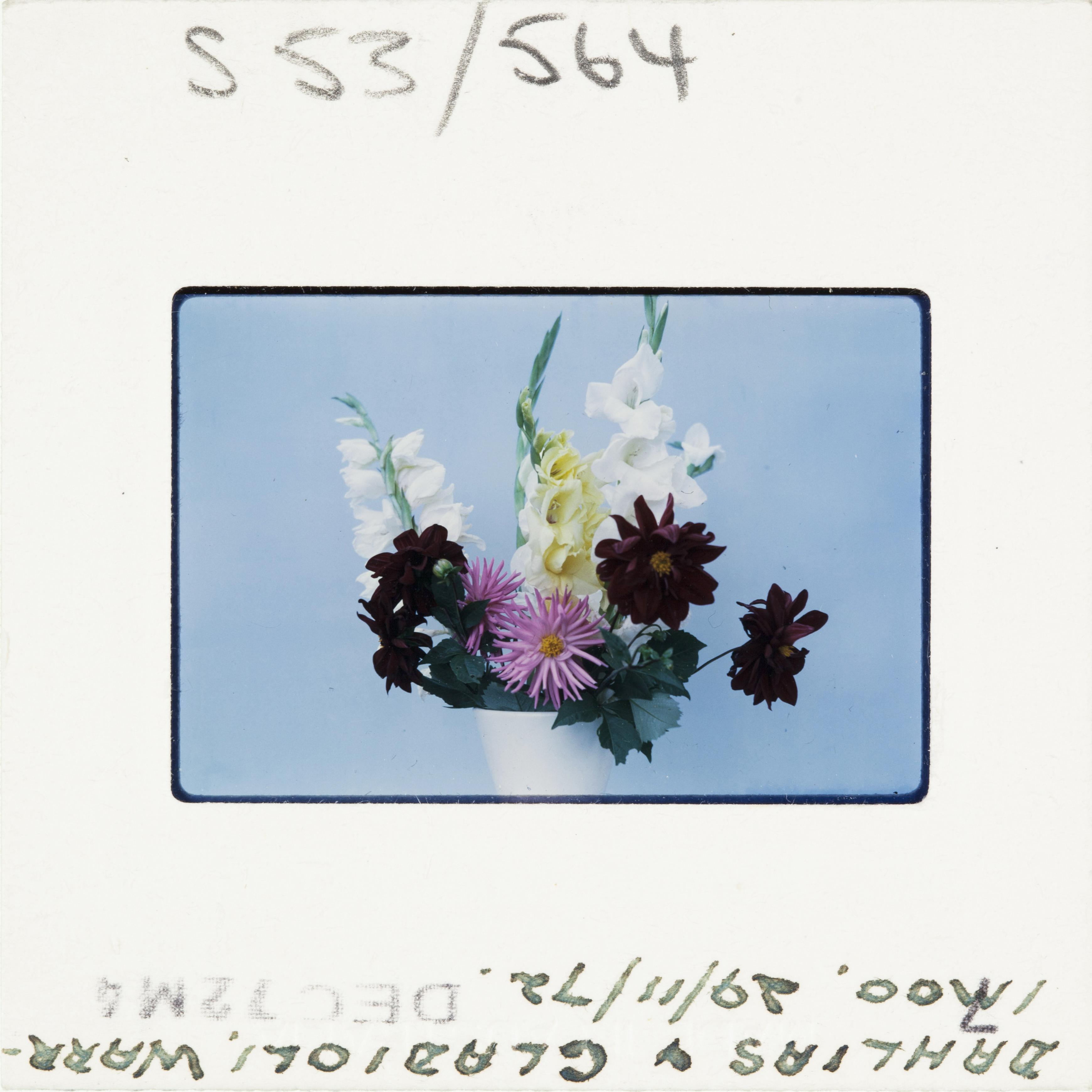 A colour Kodak slide dated 1972 - a vase of flowers against an egg shell blue background.