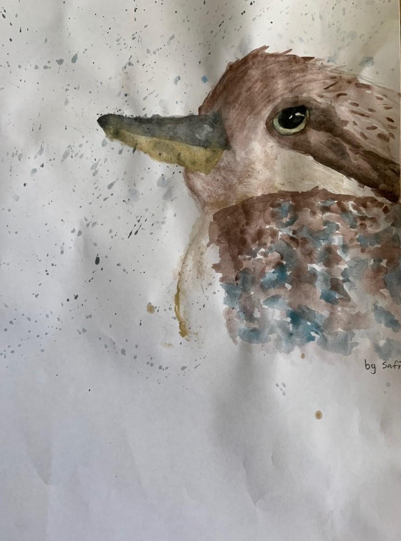 Safi  - Kookaburra