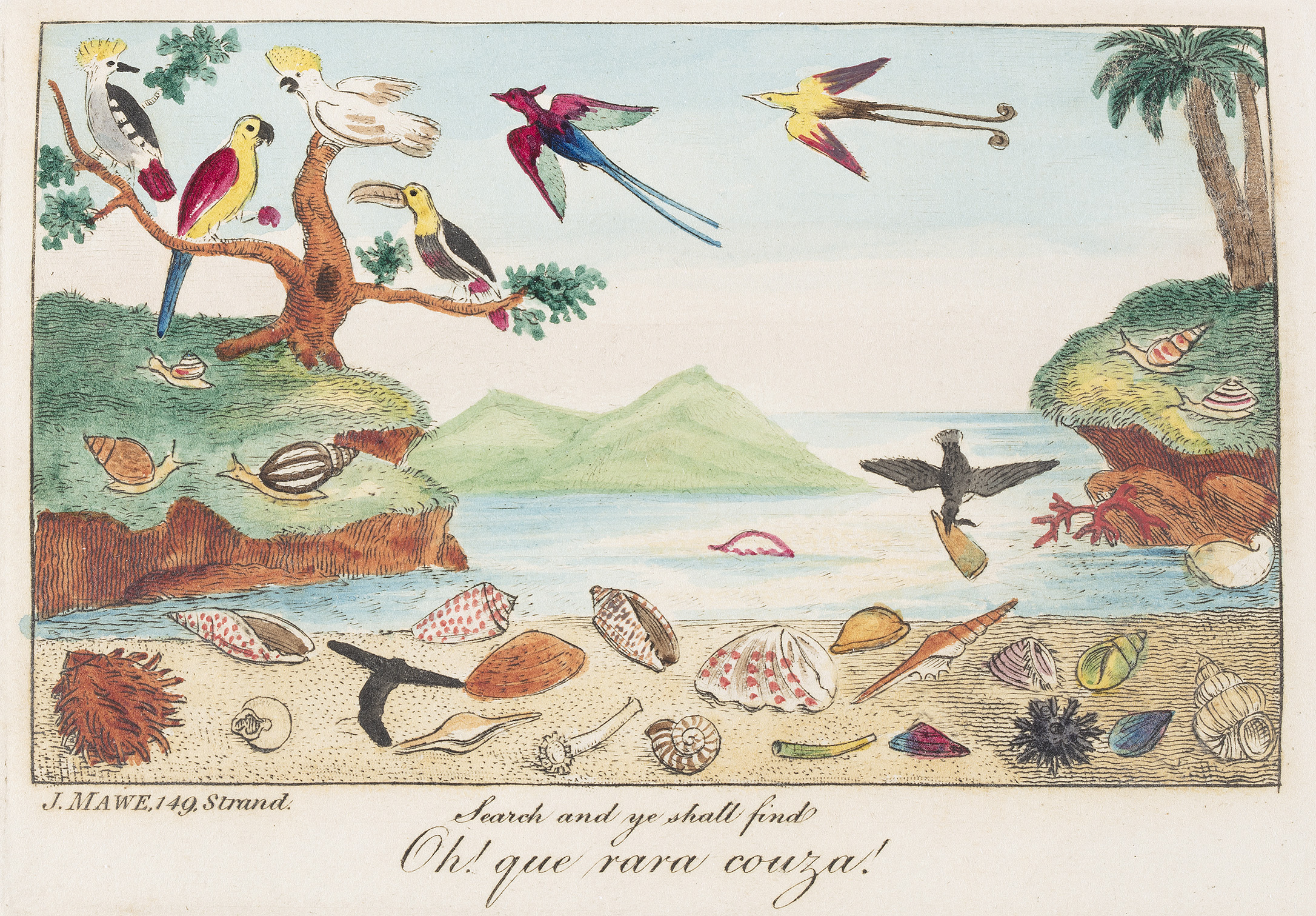 Illustration from The Voyager's Companion or Shell Collector's Pilot, 1825, by J Mawe