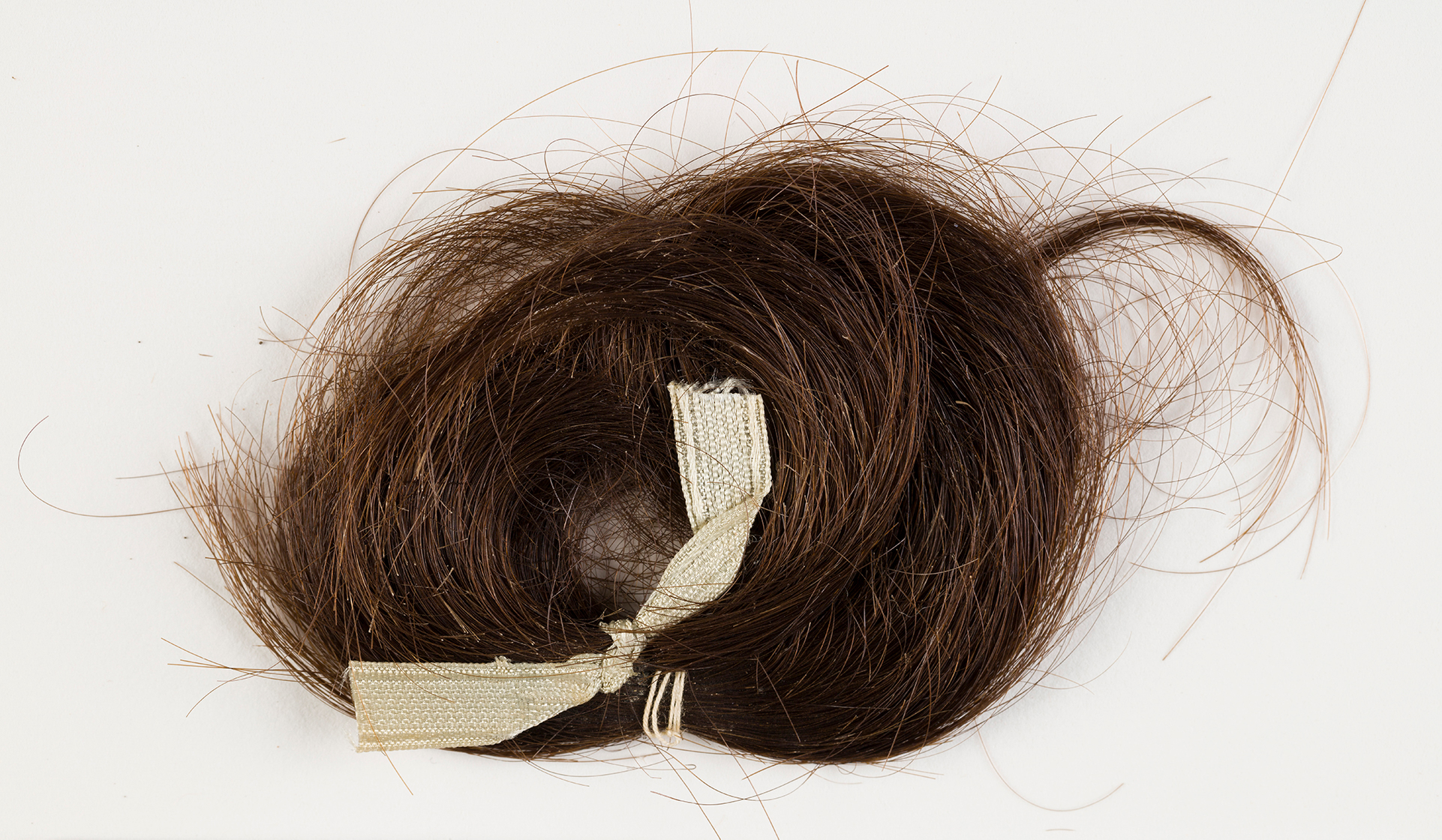 A lock of reddish brown hair, tied with a white ribbon.