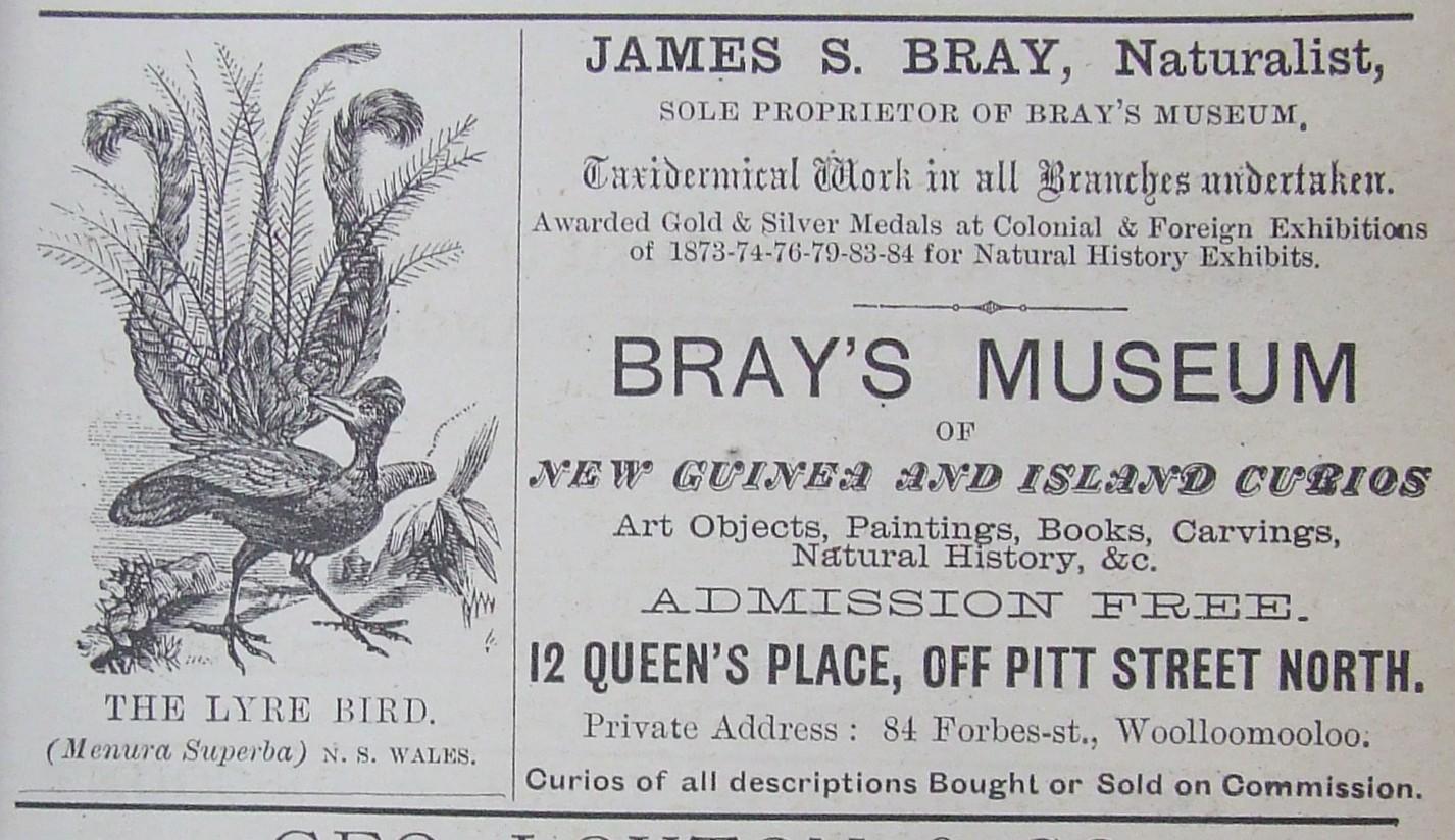 Bray's Museum Woolloomooloo - Lyre Bird