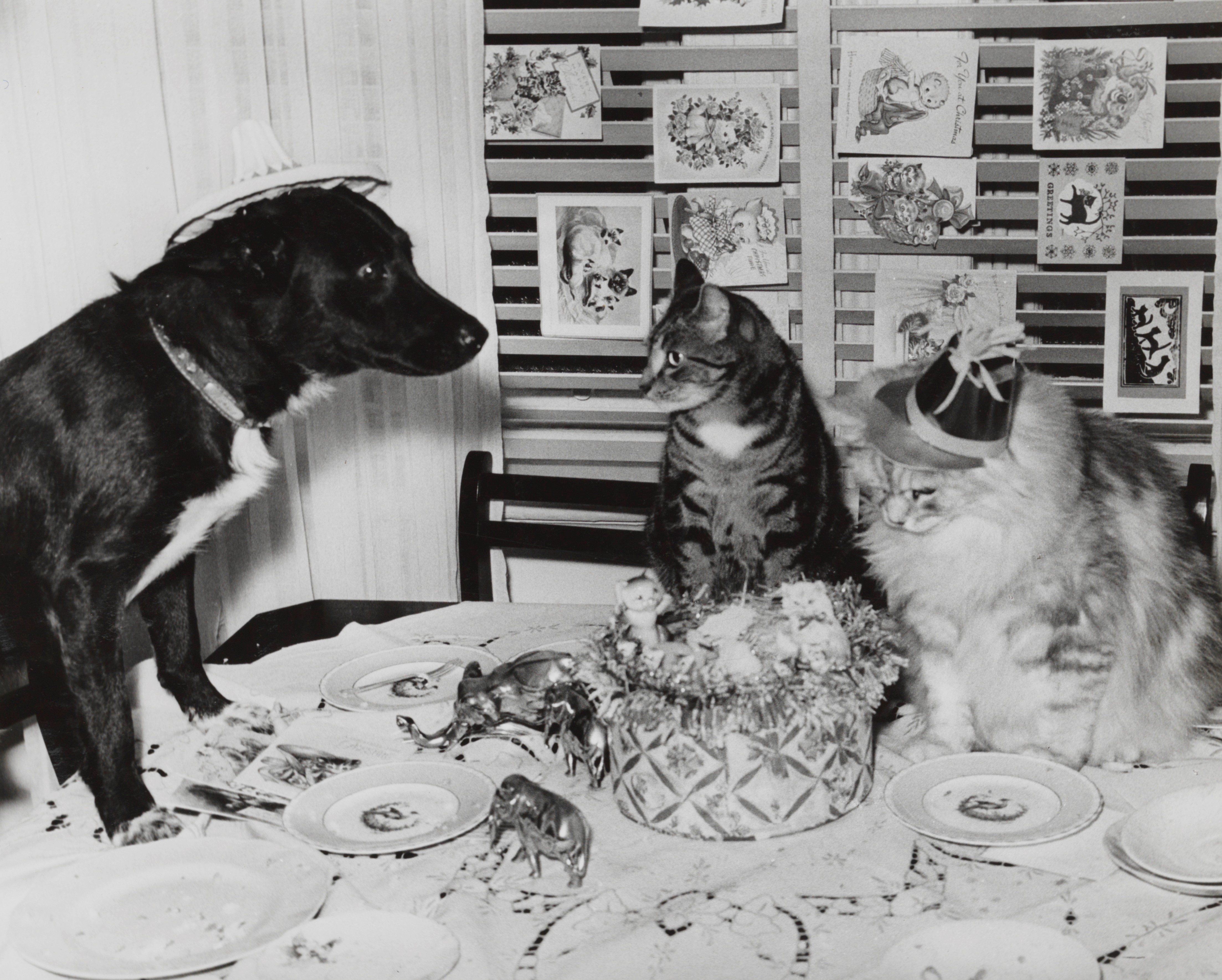 Photo of a dog and two cats on a table