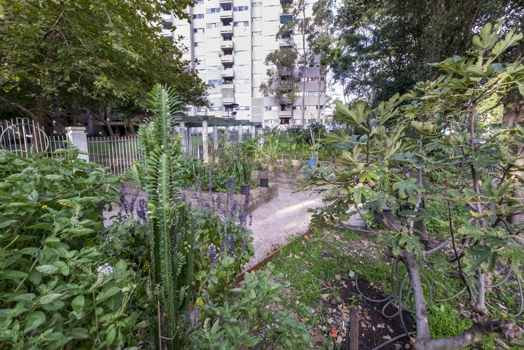 Solander community garden, Waterloo