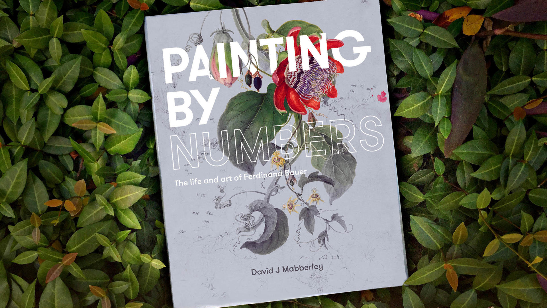 Painting By Numbers book cover