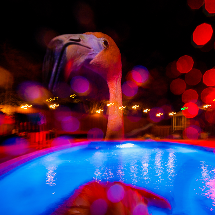 flamingo in a pool at night time