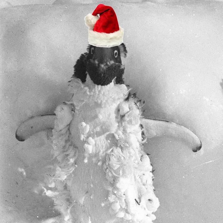 Penguins with santa hats, Christmas image