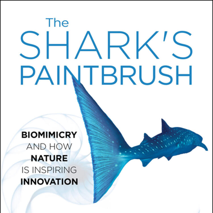 Painting of shark swimming on book cover of The Shark's Paintbrush by Jay Harman