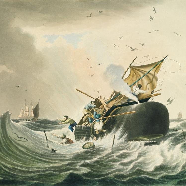 Painting of boats attacking a sperm whale.
