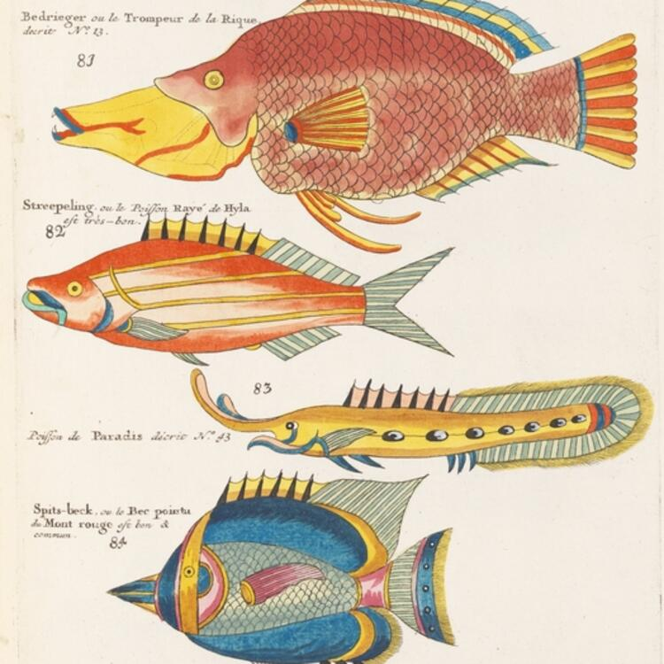 Page of a book with five coloured illustrations of fish.