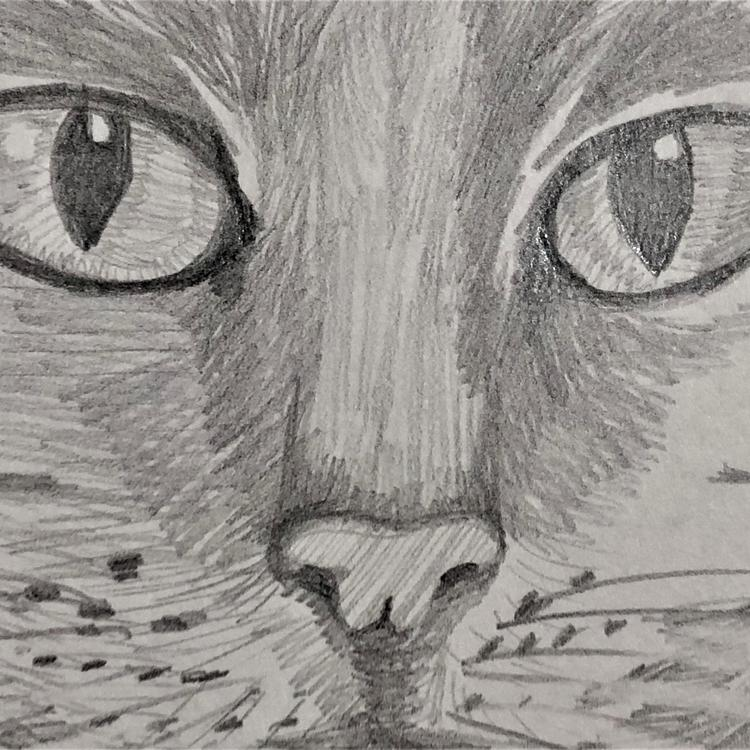 A pencil sketch of a cat