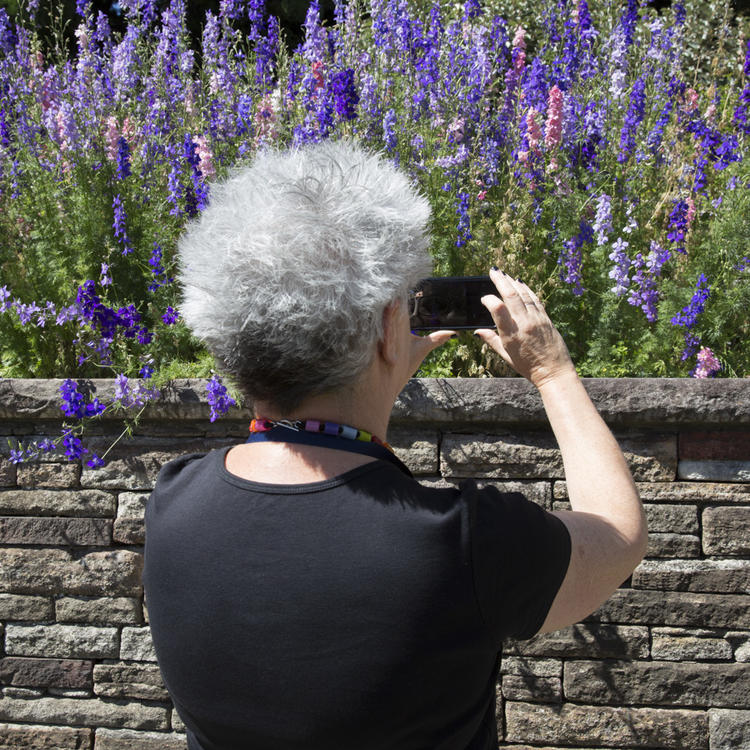 Photograph of person taking photo of flowers using a phone