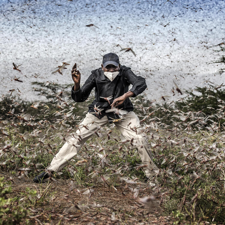 2021 Photo Contest, World Press Photo of the Year Nominee, Fighting Locust Invasion in East AfricaPhotographer Luis Tato, For The Washington Post