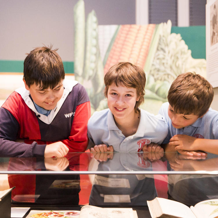 three students looking into a display case.