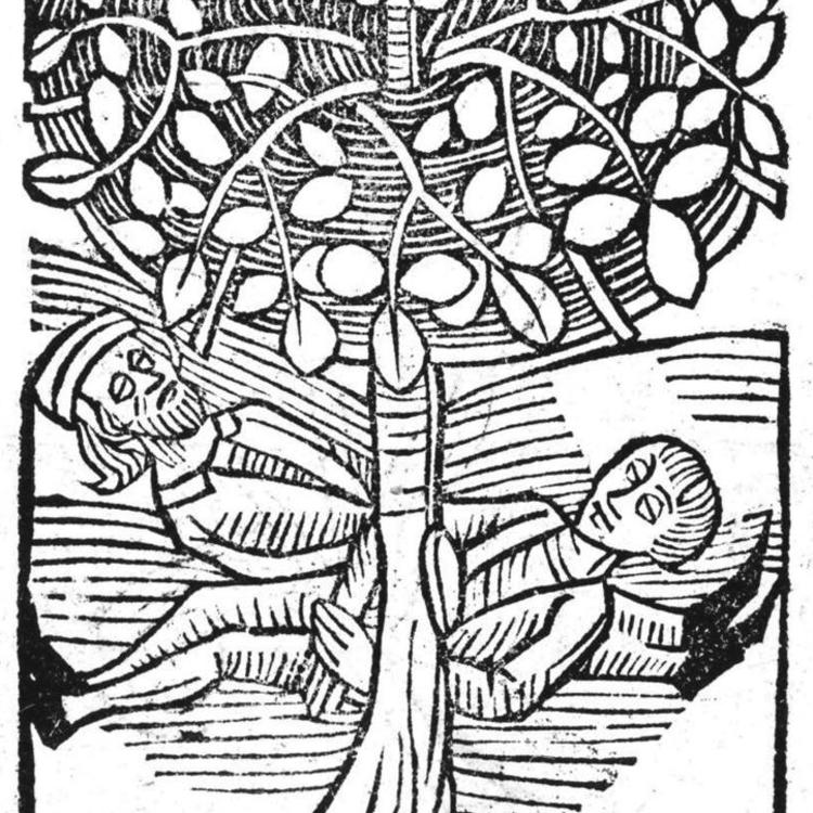 Ortus Sanitatis … [The Garden of Health …], 1517, author unknown. From the exhibition Planting Dreams: Shaping Australian Gardens