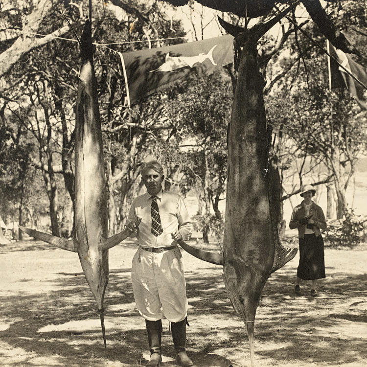 Zane Grey with striped marlin and black marlin caught off Bermagui, 14 February 1936, photo by TC Roughley, PXE 1776