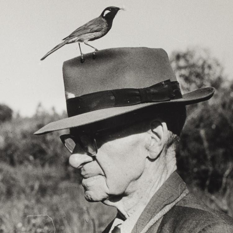 Alec Chisholm with a White-eared Honeyeater on his hat