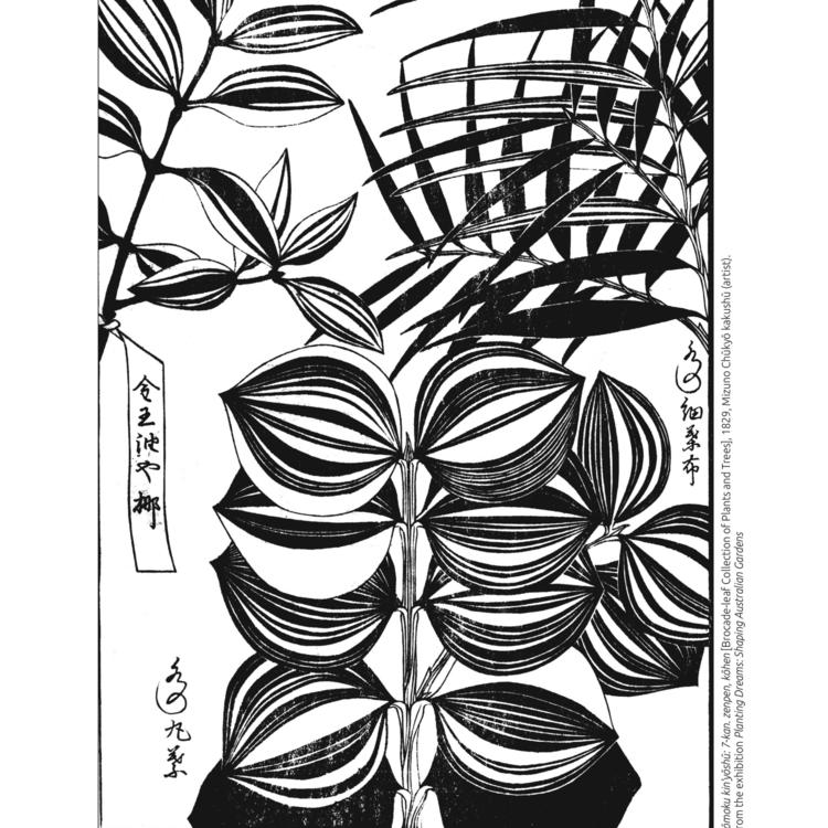 Sōmoku kin'yōshū: 7-kan. zenpen, kōhen [Brocade-leaf Collection of Plants and Trees], 1829, Mizuno Chūkyō kakushū (artist). From the exhibition Planting Dreams: Shaping Australian Gardens