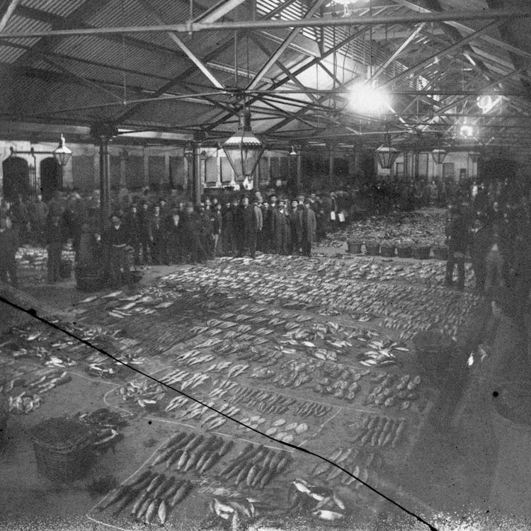 sydney_fish_markets_woolloomooloo_about_1890_170678