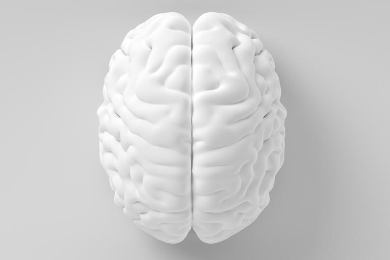 White model of brain on grey background