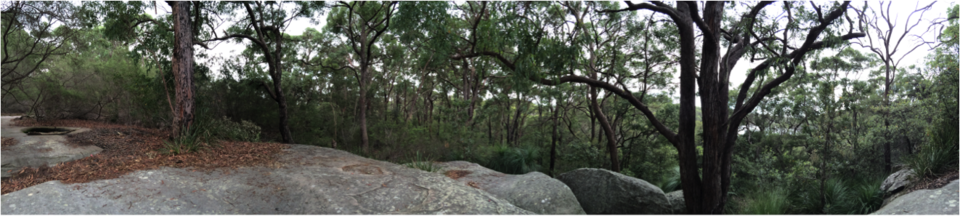 Rocks and bushland