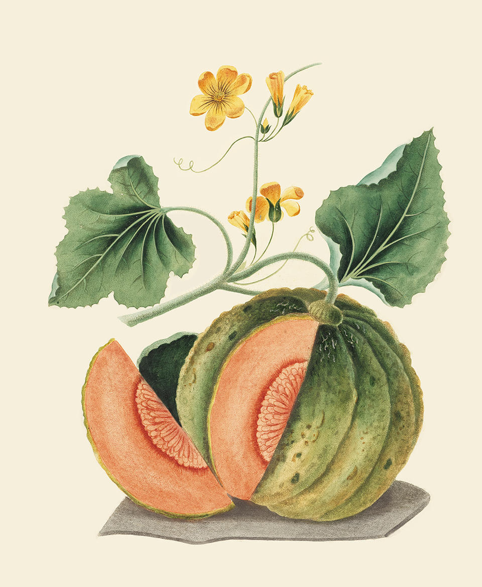 Amicua Melon Planting Dreams Exhibition 2016