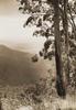 bush scene overlooking a valley