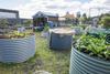 Bungarribee community garden