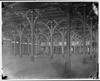 Empty interior of Garden Palace Sydney showing wooden beams and pillars