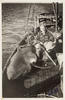 Zane Grey on a fishing boat with sharks he has just caught, MLMSS 10398