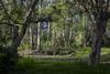 Dugga (brush forest) Country, Cattai