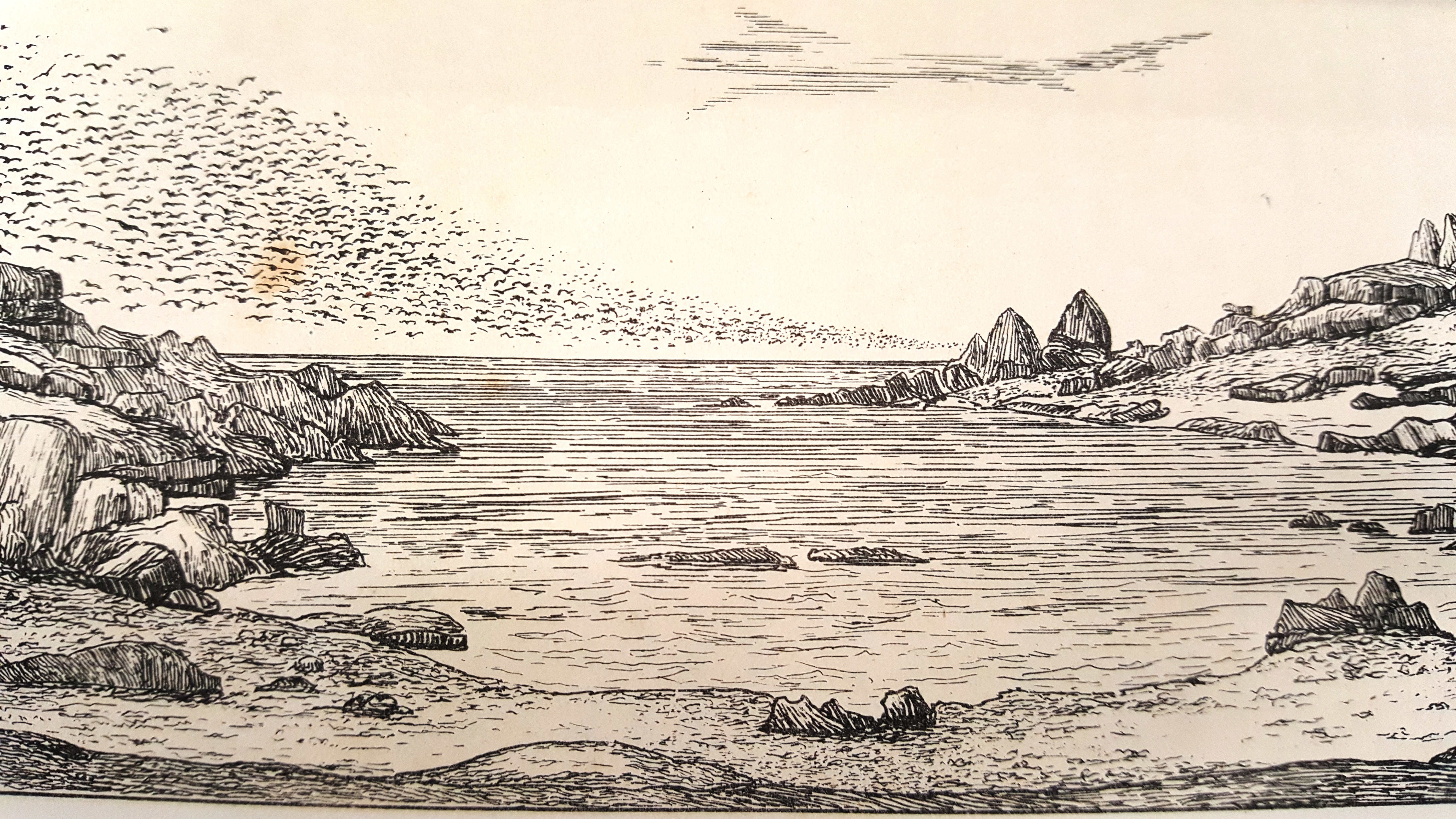 Unicorn Rocks, Badger Island, illustration by Rev. Brownrigg, Cruise of the Freak, 1872 , State Library of New South Wales